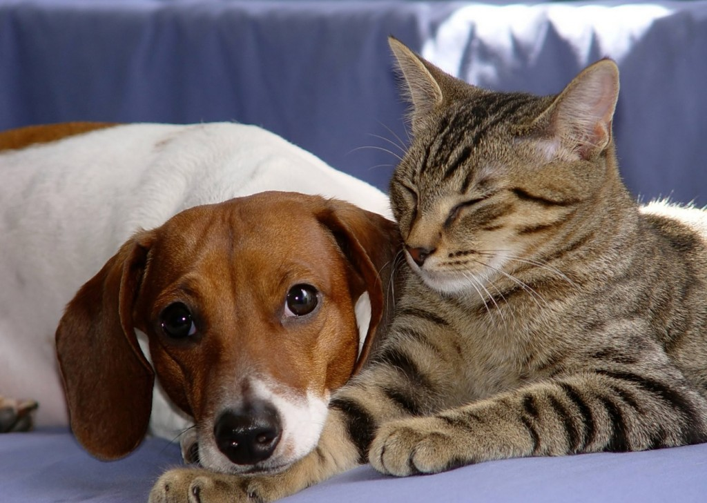 Mutuelle chiens & chats